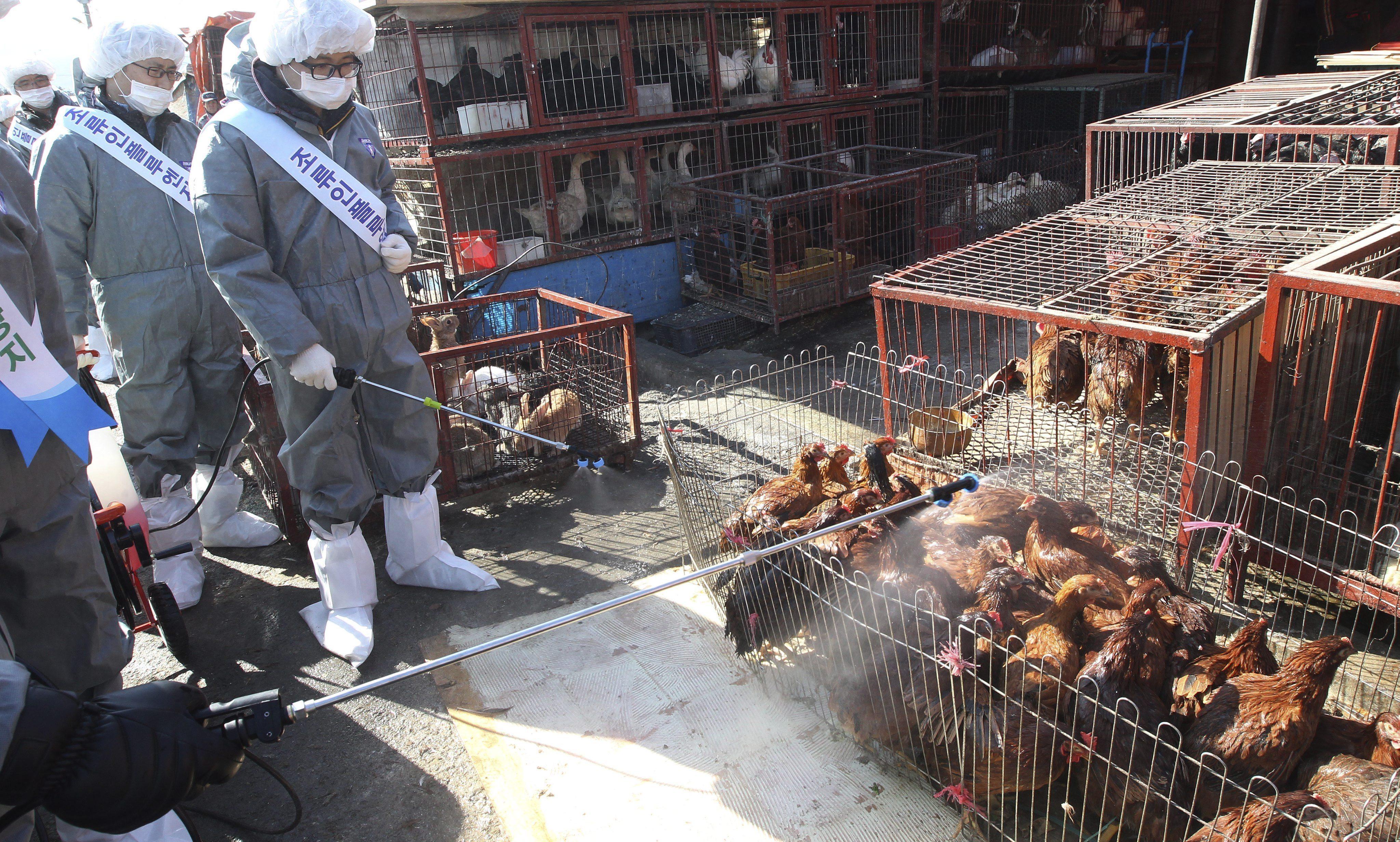 Confirman una variante leve de gripe aviar en Corea del Sur
