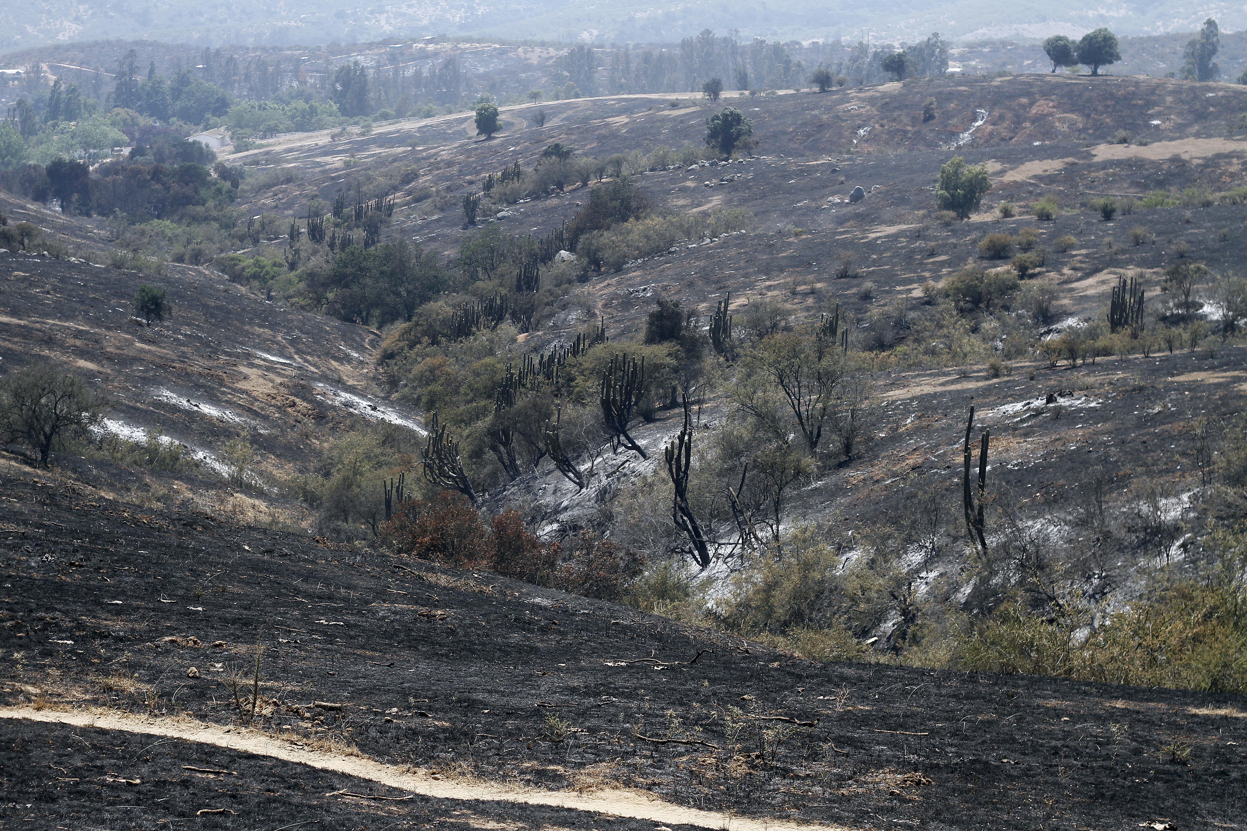 Incendio forestal en San Pedro de Melipilla1151