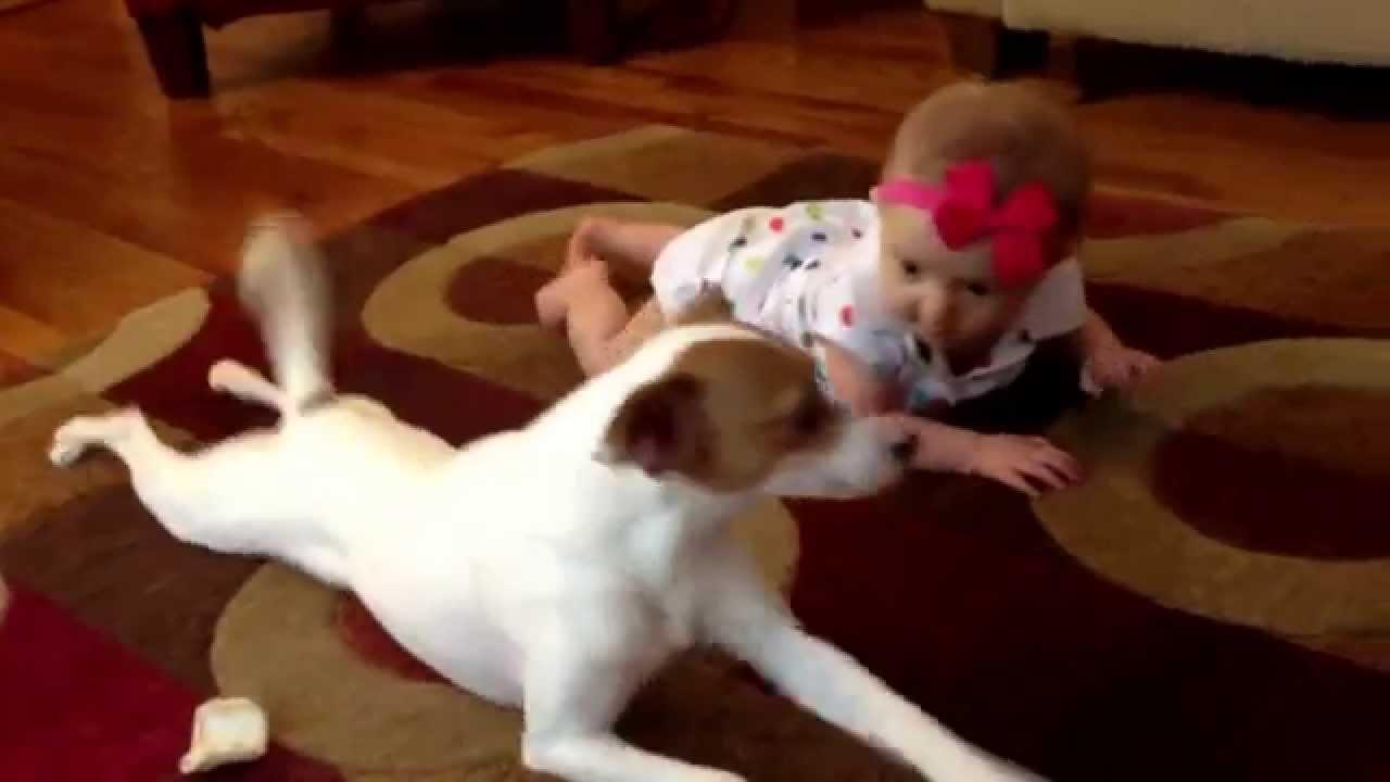 [Videos] Tiernooo: Conoce al perrito que enseña a gatear a su pequeña dueña