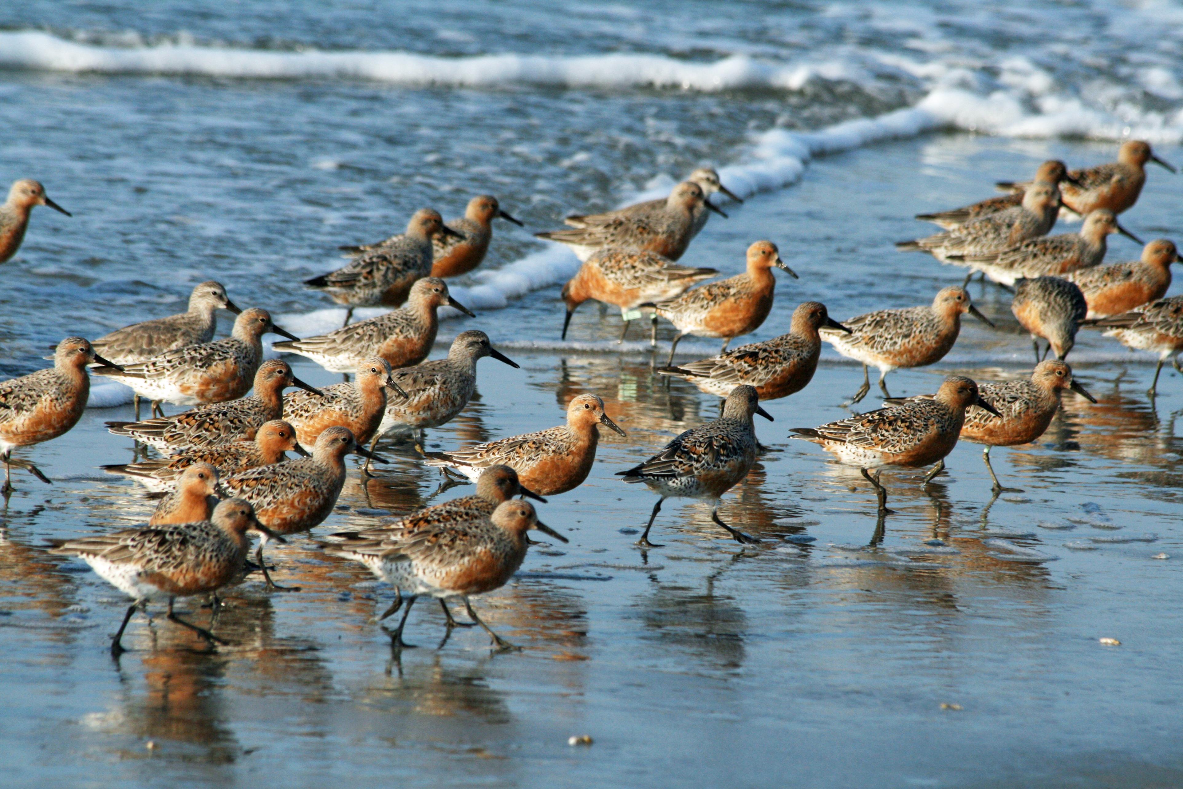 aves playeras