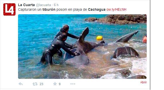 tiburon 7