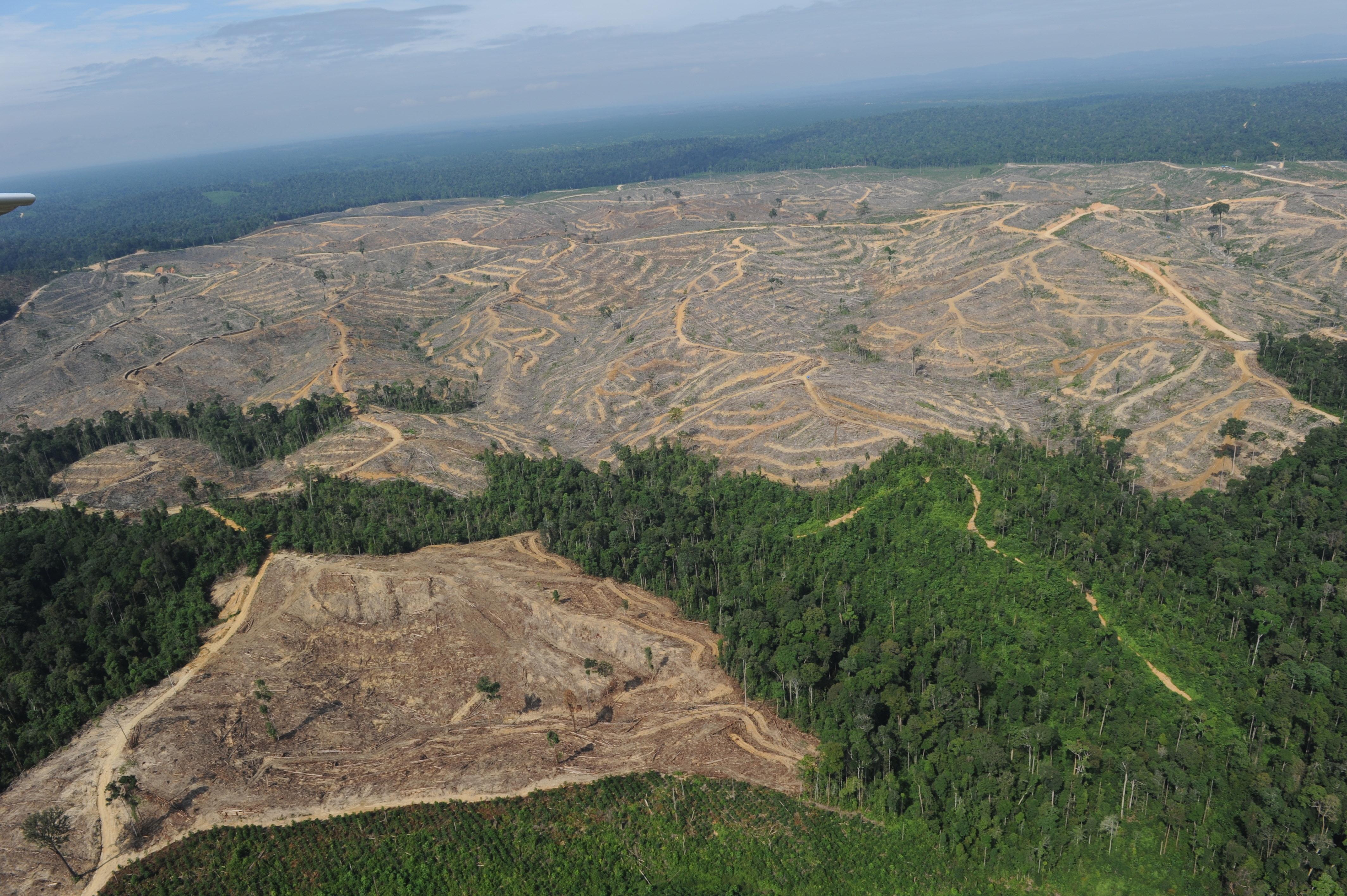 Revelan las 500 empresas responsables del 70% de la deforestación mundial
