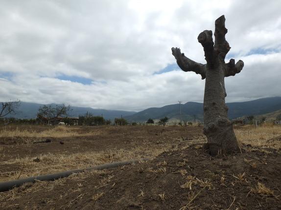 Sequía en la Provincia de Petorca