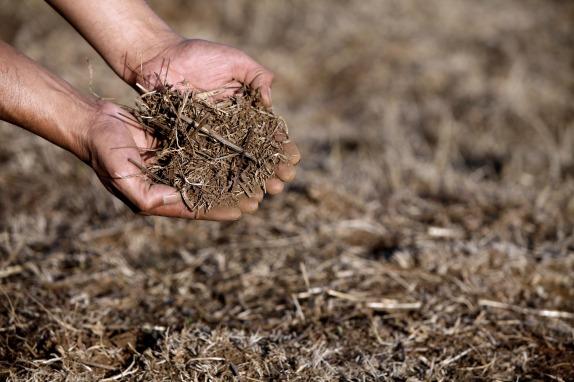 CAÑETE:  Sequia en la provincia del Bio Bio