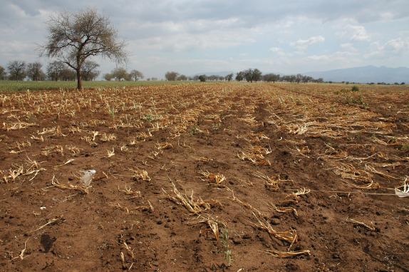 crop-drought-in-tanzania