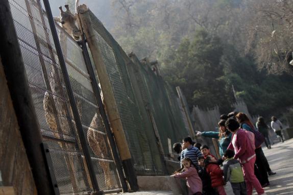 Niños del sename visitan el zoológico del Parque Metropolitano