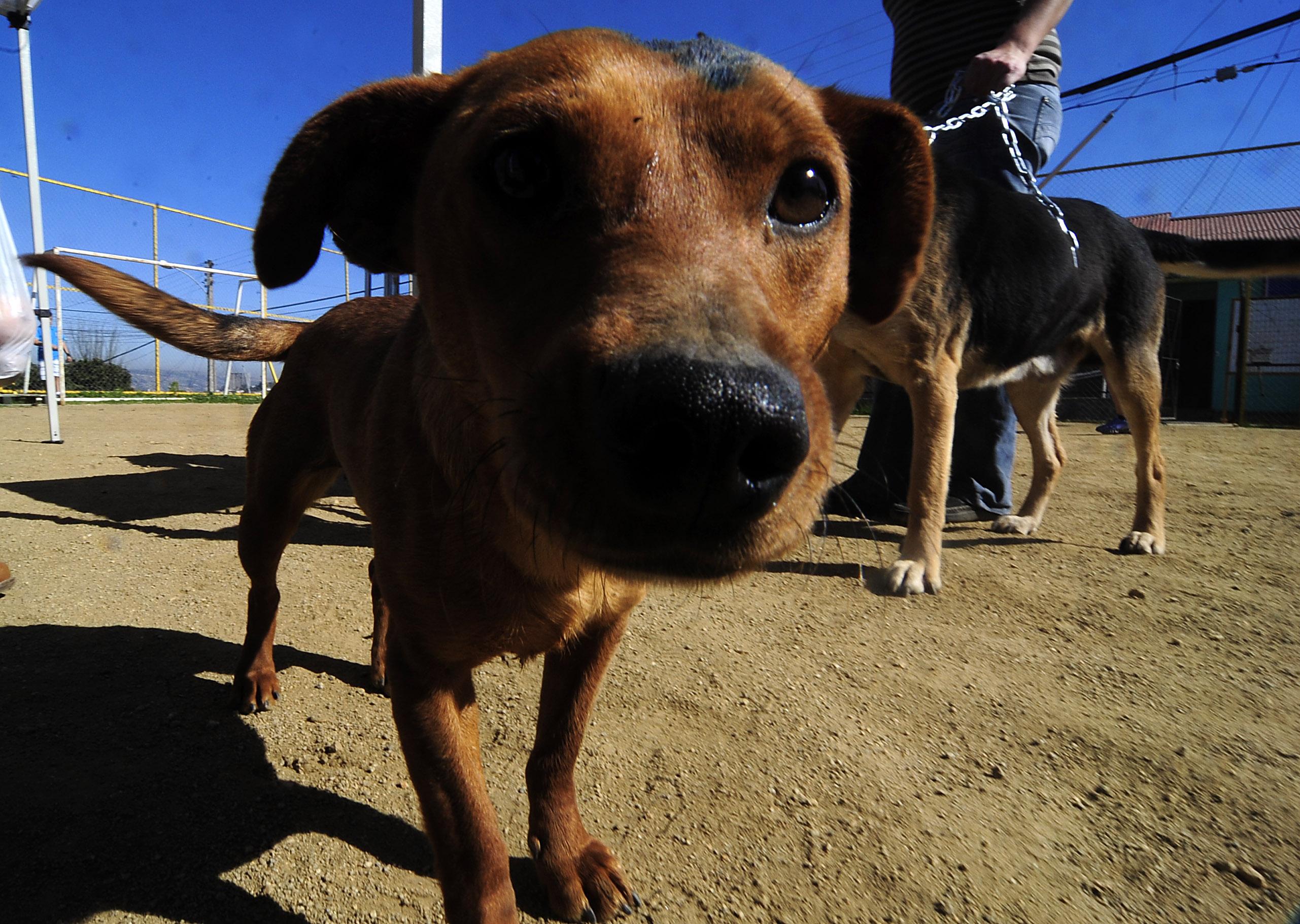 Taiwán prohíbe la eutanasia de animales abandonados tras polémico suicidio de veterinaria