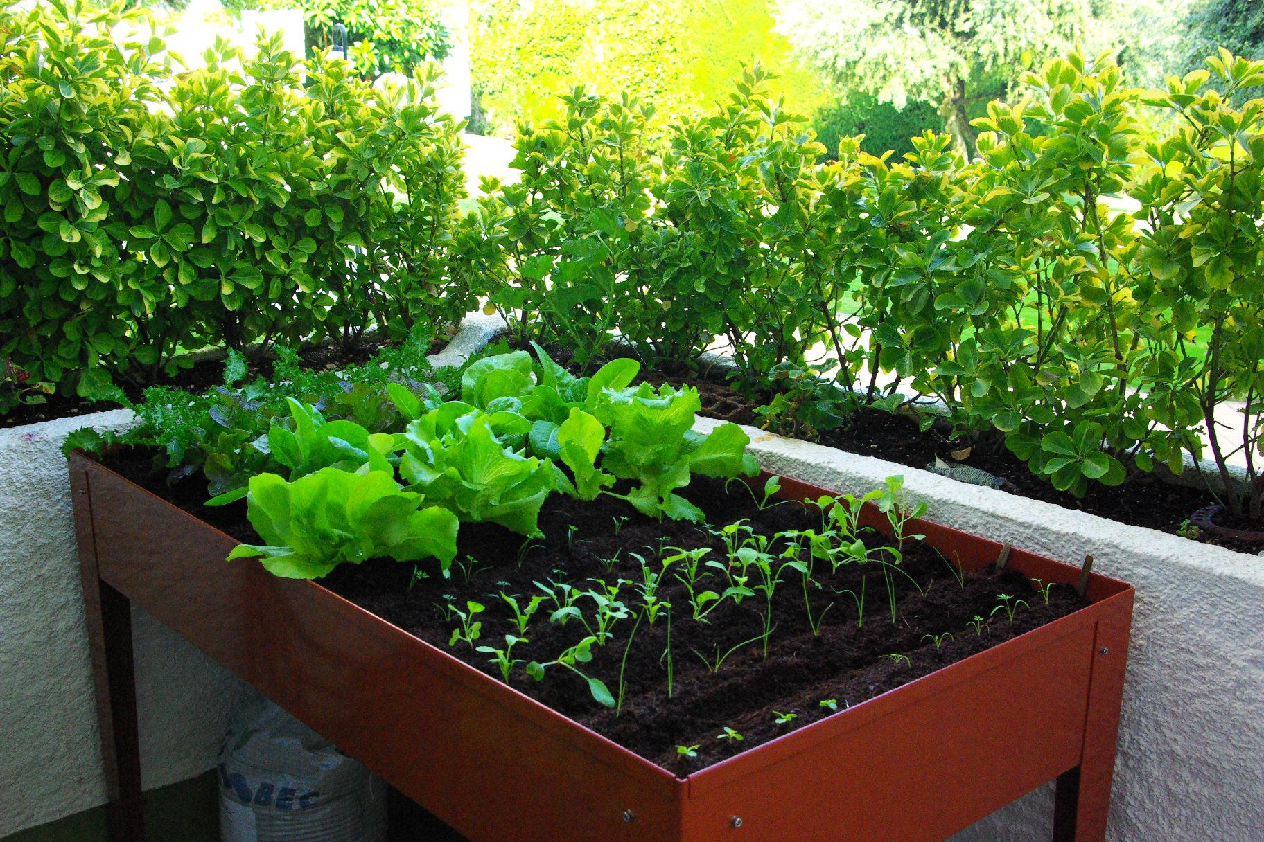 Huertos urbanos la tendencia que combate los vegetales for Huerto urbano que plantar