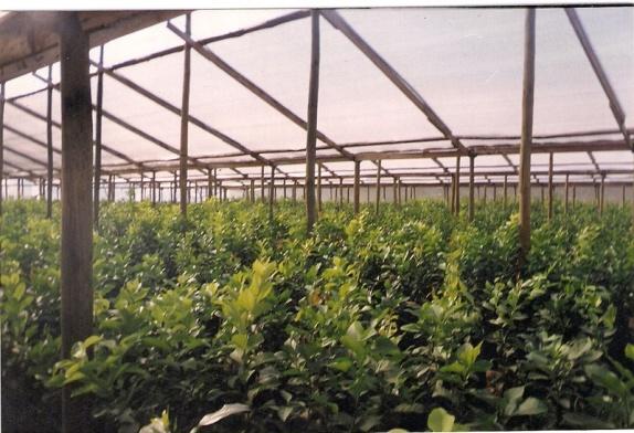 Plantsss la revolucionaria app verde creada en chile con for Viveros de arboles frutales en chihuahua