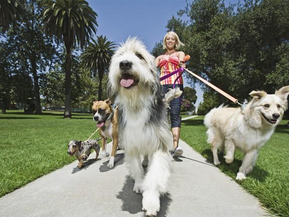 medical-questions-ask-a-prospective-pet-sitter-fb-80603304