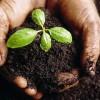 Como-plantar-un-arbol