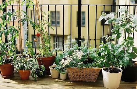Cómo Convertir Tu Terraza En Un Jardín Siete Tips Para