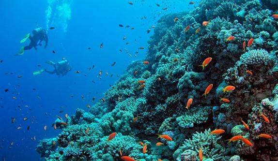 Iniciativa-de-la-ONU-para-salvar-los-oceanos
