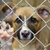 Perros-en-adopcion1