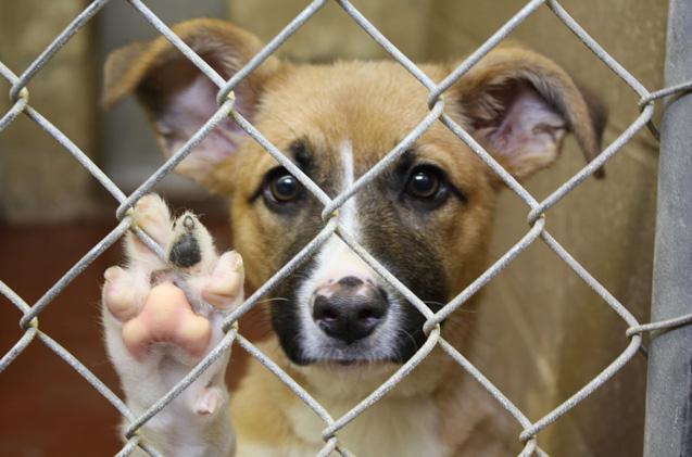 Empresa petfriendly regalará una semana de feriado legal a trabajadores que adopten un perro callejero