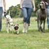 personas_paseando_perros