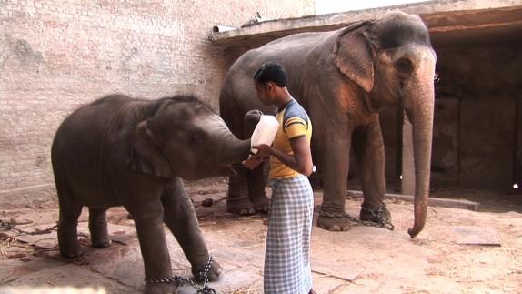 elefantes-cautiverio