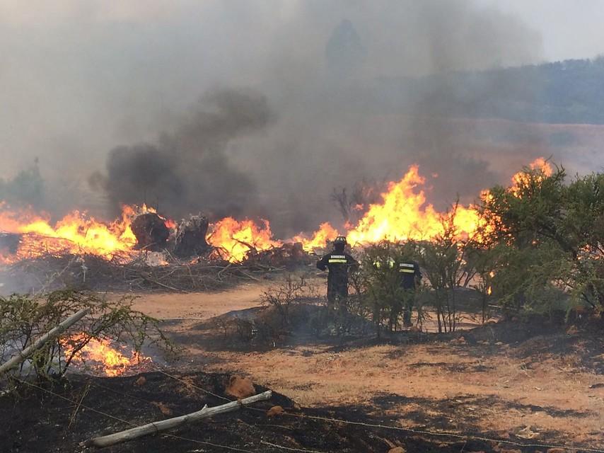 Incendios forestales: Alerta Roja en Valparaíso, Los Andes y Marga Marga