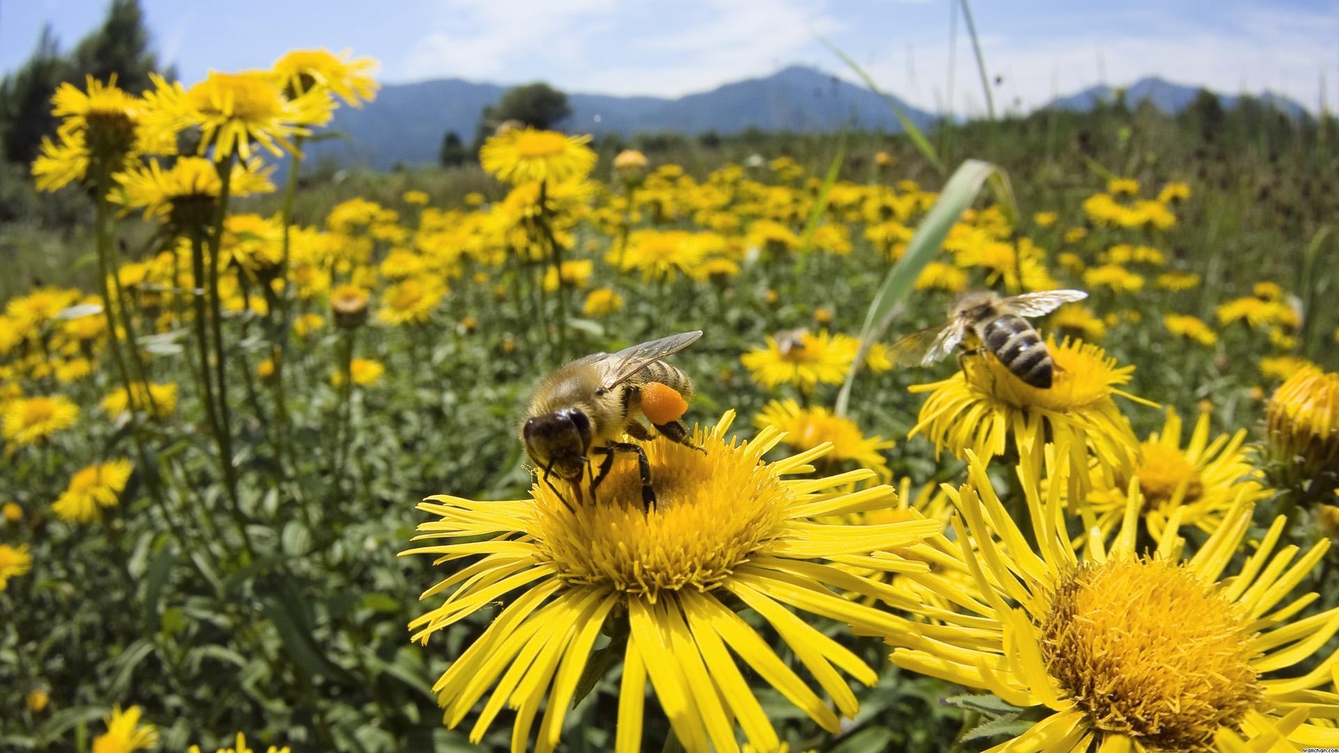 Black Mirror es una realidad: crean abeja robótica para polinizar flores