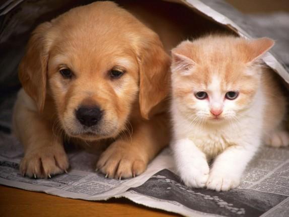 perros-y-gatos