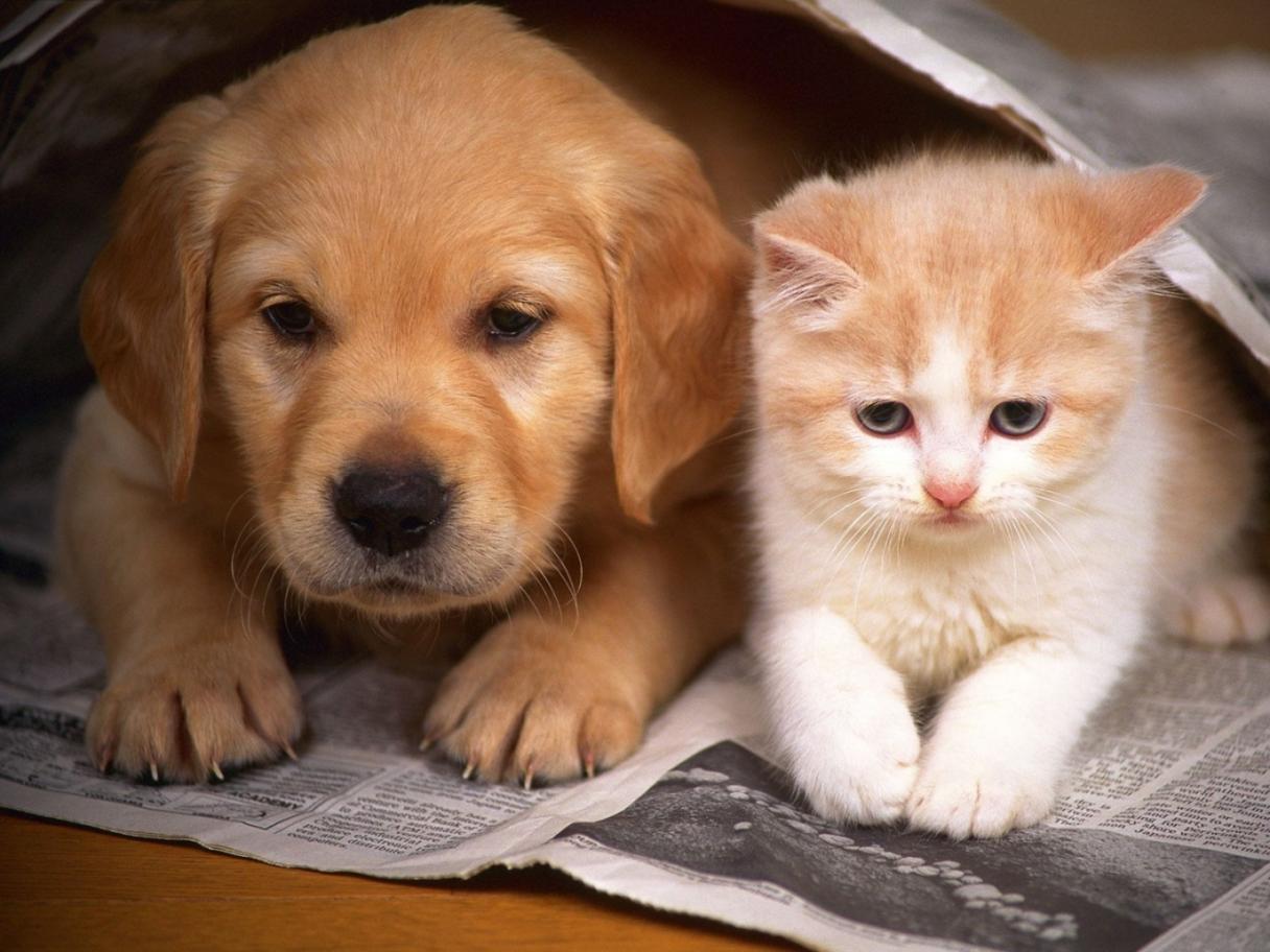 Perry&Gatti, la novedosa campaña que lanzó la Subdere sobre tenencia responsable de mascotas
