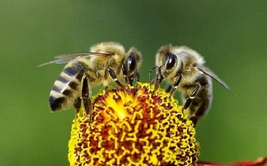 Uso indiscriminado de pesticida: la razón de porqué hay cada vez menos abejas en el mundo
