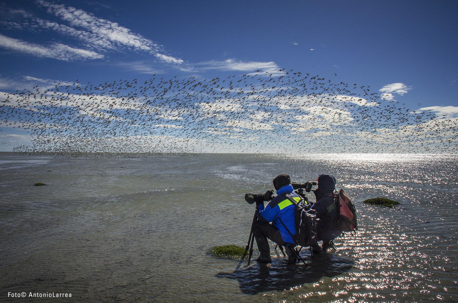 Bahía Lomas, el humedal que alberga a más de 60 mil aves en Tierra del Fuego