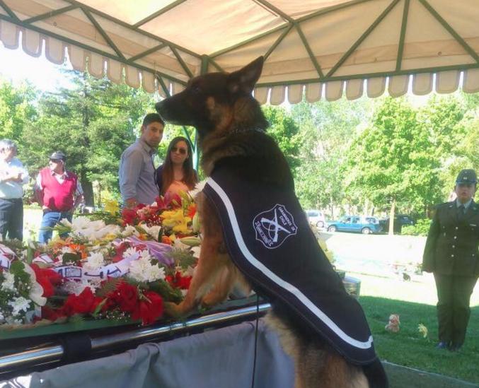 Perro policial emociona a los asistentes del funeral de su adiestrador