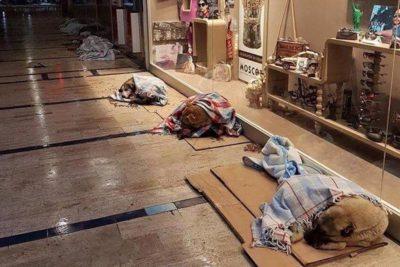 FOTO   Lindo gesto: perros vagos de Estambul durmieron en centros comerciales por fuerte nevazón