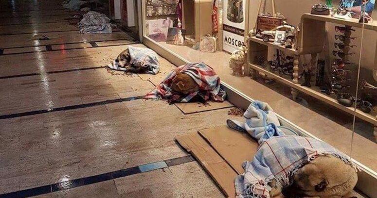 """""""FOTO   Lindo gesto: perros vagos de Estambul durmieron en centros comerciales por fuerte nevazón"""""""