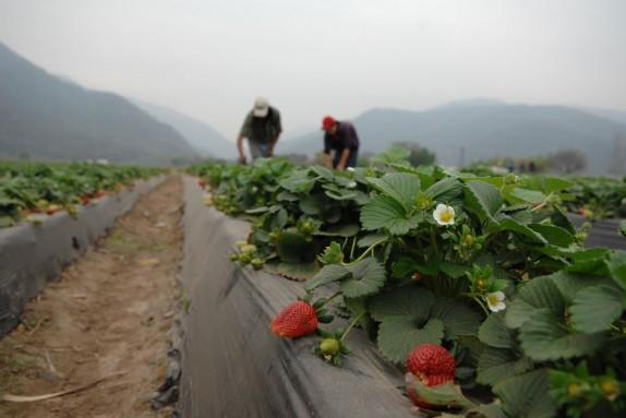 20160610-desastres-sector-agricola-america-latina-afectaron-67-millones-personas-una-decada