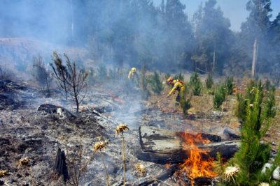 Reportan detención in fraganti a sujeto que habría estado quemando pastizales en Curanilahue