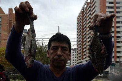Caso correos: Comisión de Pesca solicita que Economía estudie disolución de Asociación Pesquera