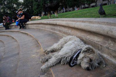 Adopción responsable de caninos y felinos en situación de calle: urgente legislación
