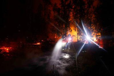 Dónde y cómo ayudar a los animales afectados por incendios en el territorio nacional