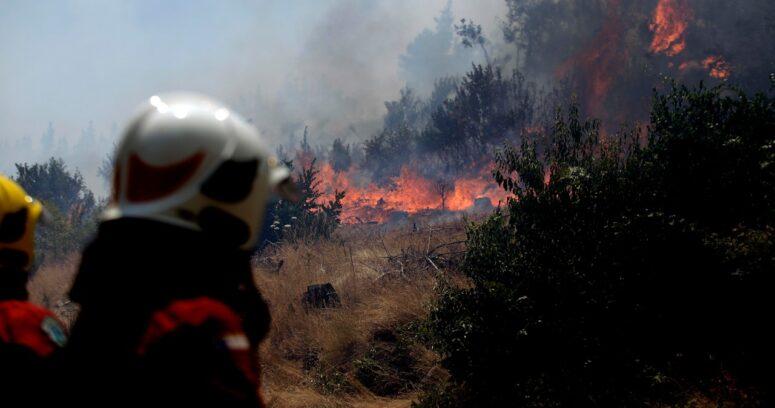 Reportan detención de dos universitarios que habrían iniciado el incendio forestal en Bulnes