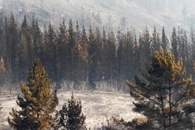La otra cara del incendio: experto forestal advierte posible desaparición de especies nativas