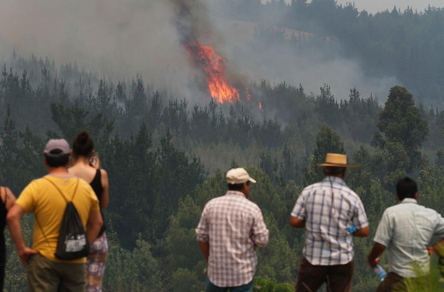 Bosques nativos quemados por incendios tardarán 20 años en volver crecer