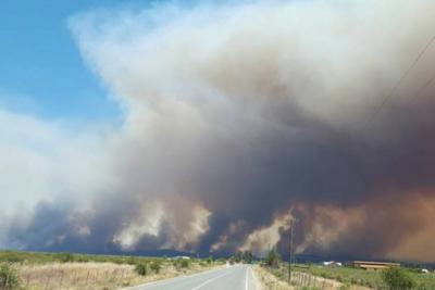 WWF Chile pide adaptar medidas al cambio climático para recuperación de territorio afectado por incendios