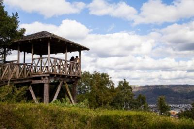 Rebrotes de siniestros amenazan al Cerro Ñielol, monumento natural de Temuco