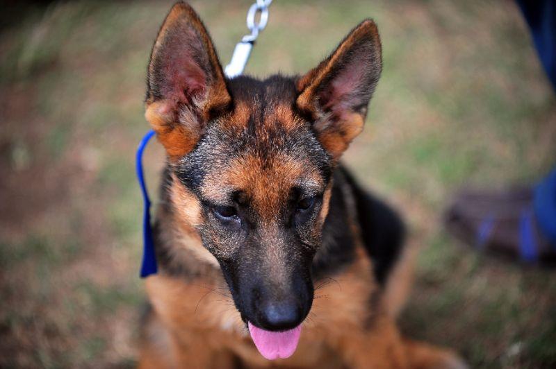VIDEO | Filmación de película en la que maltratan y casi ahogan a un perro desata polémica mundial