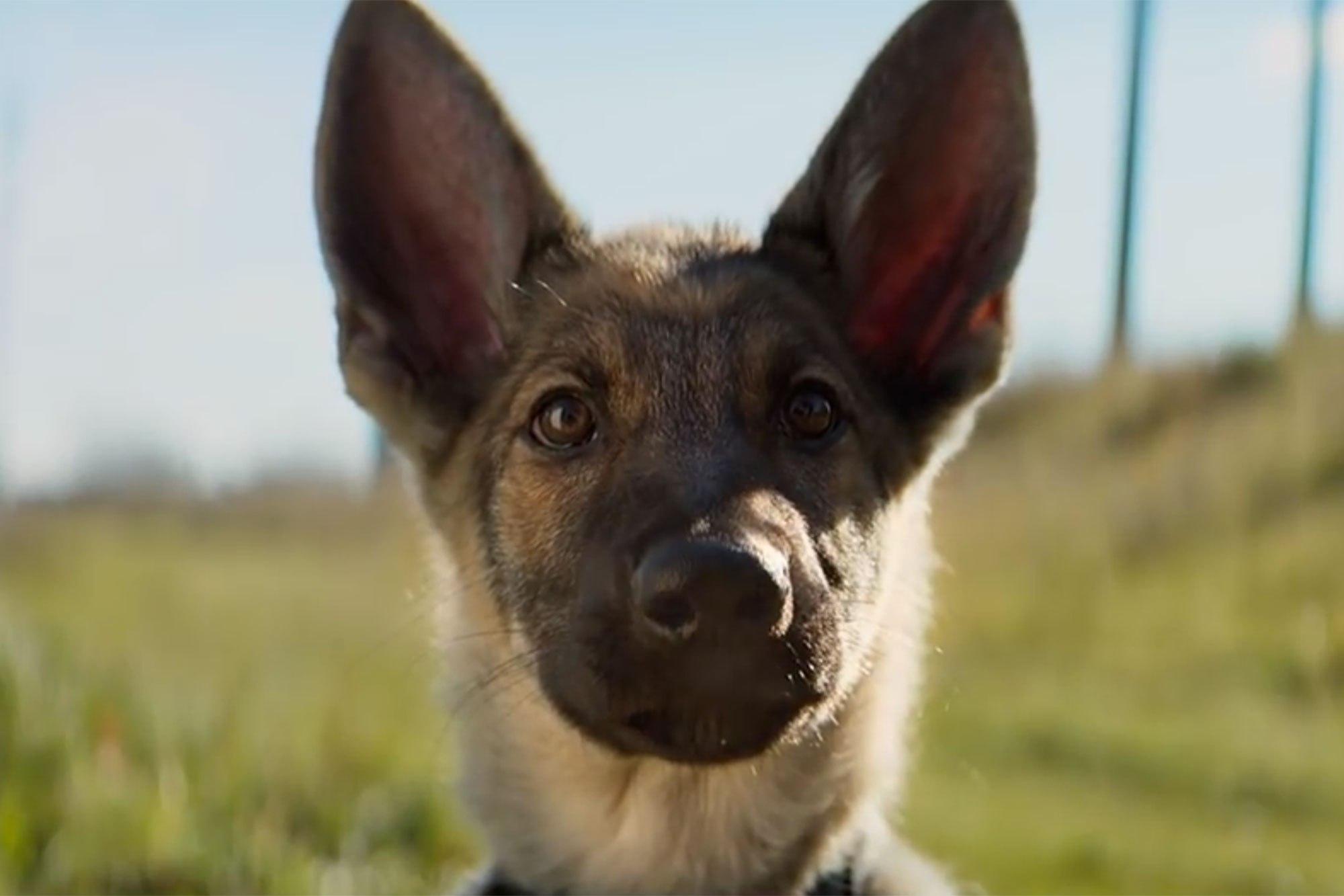 """Universal canceló la premiere de """"A Dog's Purpose"""" tras polémica por maltrato a perro"""