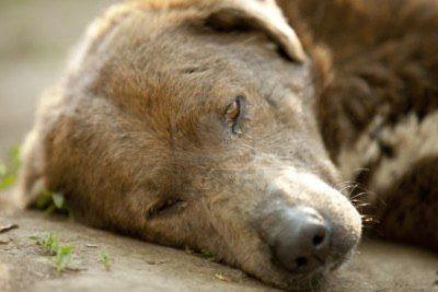 """""""Lo degolló delante de todos"""": denuncian brutal caso de maltrato animal en Villa Alemana"""