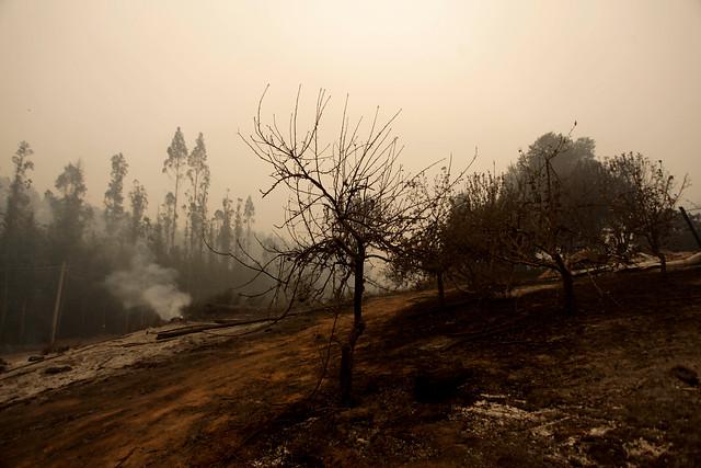 Mujer fue detenida tras ser acusada de iniciar incendios forestales