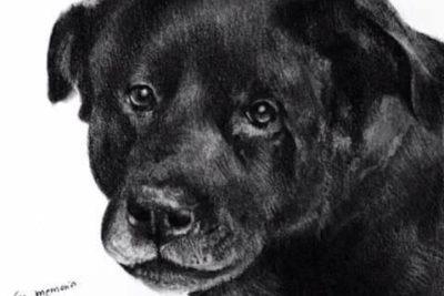 Alcalde de Recoleta anuncia querella contra los responsables de muerte de perro en Patronato