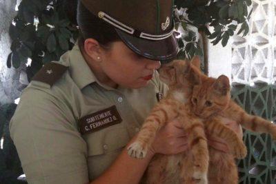 """Operativo antibombas de Carabineros terminó """"descubriendo"""" una caja llena de gatitos frente a Contraloría"""