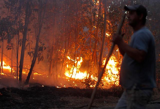 Incendio forestal cobró una nueva víctima fatal en las cercanías de Curepto