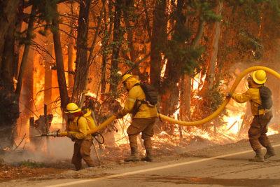 VIDEO   Campaña busca recuperar bosques de O'Higgins y El Maule destruidos por incendios del verano
