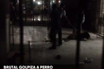 Llaman a funar a dueña de galería en Patronato tras denuncia por maltrato animal: perro murió a palos