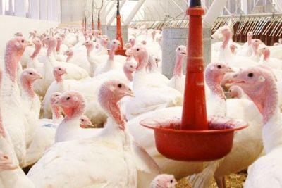 Agrosuper confirma presencia de influenza aviar en planta de Sopraval tras denuncia del SAG
